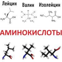 Аминокислоты что это такое